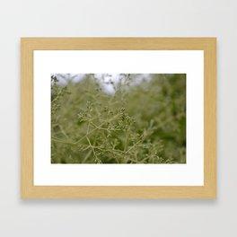 Green Tones II Framed Art Print