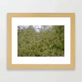 Green Tones II Framed Art Print