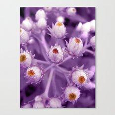 violet beauty Canvas Print
