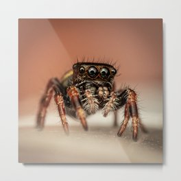 Spider Four Eyes - 4 Eye Spider Metal Print