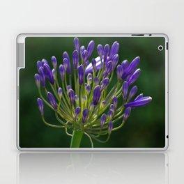 Agapanthus Flower Laptop & iPad Skin