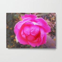 Glowing Pink Rose Metal Print