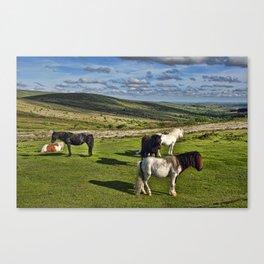Dartmoor Wild Ponies Canvas Print
