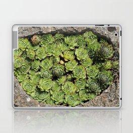 Succulents Lovers Laptop & iPad Skin