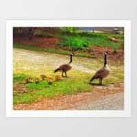 Family of Geese Art Print