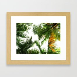the tropical coconut is here Framed Art Print