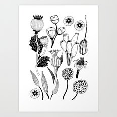 Seed Pods Art Print