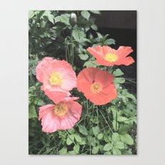 Papaveraceae Canvas Print