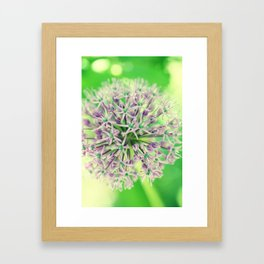Allium christophii Framed Art Print