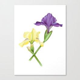 Watercolor irises Canvas Print