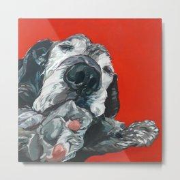 Leonard the Senior Dog Metal Print