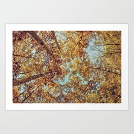 Tree bunches Art Print