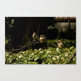 Birds of a Feather. Canvas Print