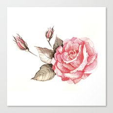 Watercolor rose Canvas Print