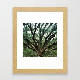Age and Wisdom Framed Art Print