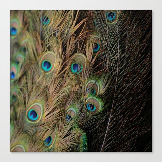 Peacock #1 Canvas Print