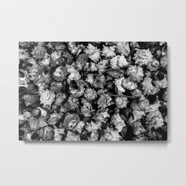 Shattered Shells Metal Print