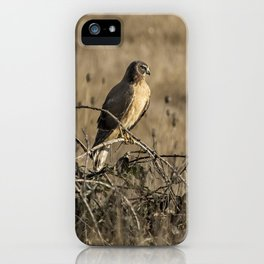 Northern Harrier at William L Finley iPhone Case