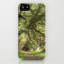 Wye Island Tree Tunnel | Maryland iPhone Case