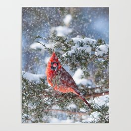 Let It Snow (Northern Cardinal) Poster