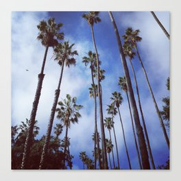 Palm Trees (blue sky, sunny day) Canvas Print