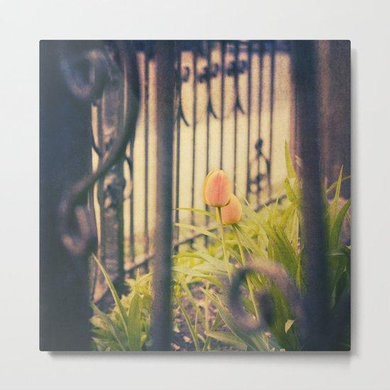 orange tulips Metal Print