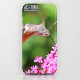 Hummingbird Hawk-moth on Valerian flower iPhone Case
