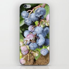 Ready to pick blueberries? iPhone Skin