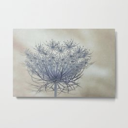 Vintage Wildflower Botanical Queen Anne's Lace in Blue Metal Print