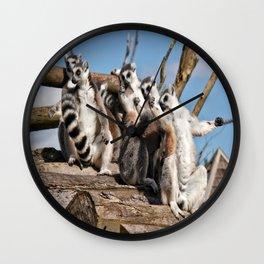 Sunbathing Ring-Tailed Lemurs Wall Clock