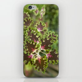 Coleus Inky Fingers iPhone Skin