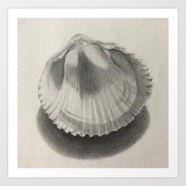 Cockle Shell Art Print