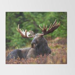 Relax Moose Throw Blanket