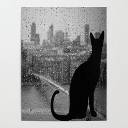 cat gray day Poster