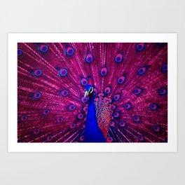 Peacock Pink 85 Art Print