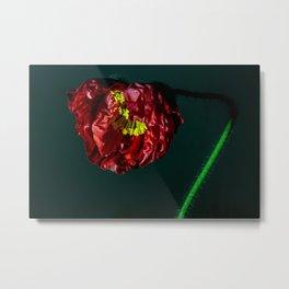 Blooming Red Poppy Metal Print