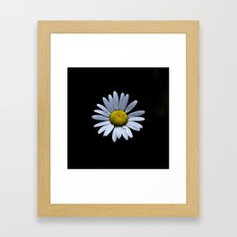 The Daisy Framed Art Print