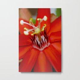 Red Passiflora Flower (Macro Photography) Metal Print