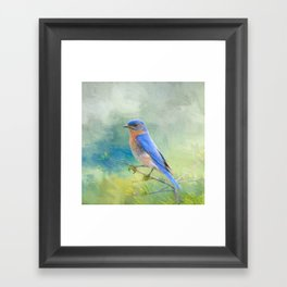 Bluebird In The Garden Framed Art Print