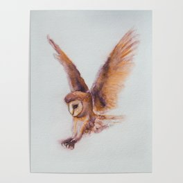 Coruja the Owl by Machale O'Neill Poster