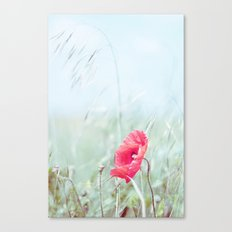 Thoughtful Poppy Canvas Print