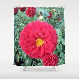 Autumn flower, red beauty. Shower Curtain