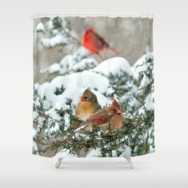 After the Snow Storm: Three Cardinals Shower Curtain