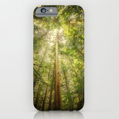 Forest Tree Tops iPhone 6s Slim Case