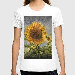 Sunflowers Blooming in a Field T-shirt