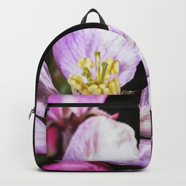 Close up of a Crab apple blossom Backpack