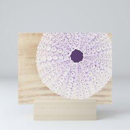 Purple Beach Photography, Sea Urchin Photograph, Pastel Coastal Seashell Photo Mini Art Print
