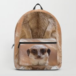 A cute Meerkat, standing on two legs, watches his area. Backpack