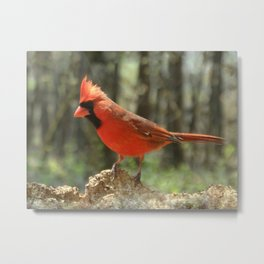Northern Cardinal Metal Print