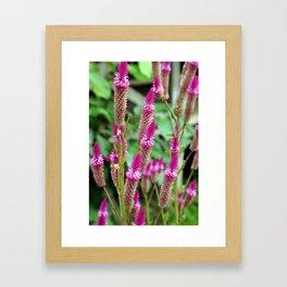 Pretty, Pink, Perennial Flowers Framed Art Print